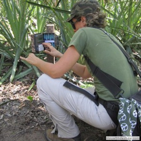 14. Pati from the project uses camera traps to gain more information on tapir ecology
