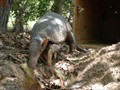 Researchers liken searching for Armadillos to searching for a needle in a haystack