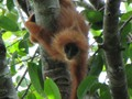 The project is based in Kalimantan, Indonesian Borneo